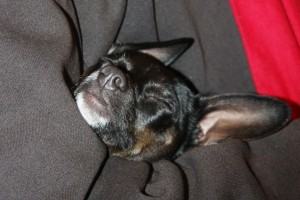 Sparky at rest