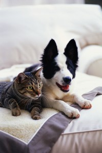 Dog and Cat Reclining on a Blanket