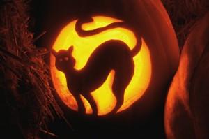 Cat Carved in Jack-O'-Lantern