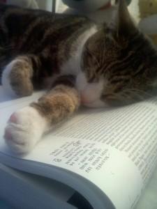 Hemingway reads
