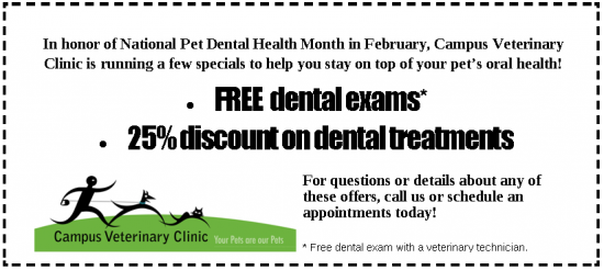 dental health coupon