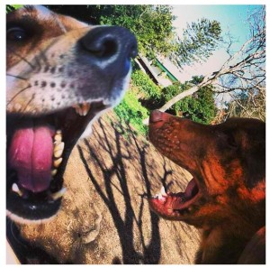 """Melo & Sampson employ the use of a """"Soft Mouth"""" in their play."""