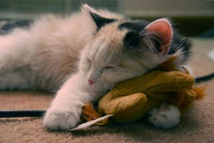can-cats-eat-catnip