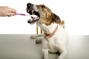dog-and-toothbrush1