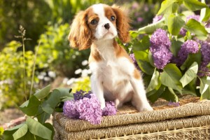 Dogs-In-The-Garden