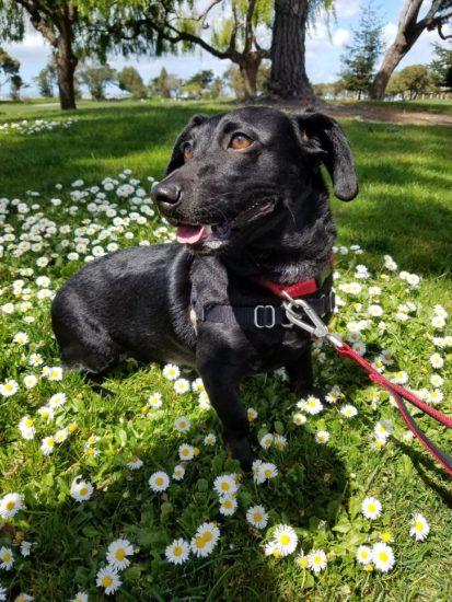 Animal News – Campus Veterinary Clinic